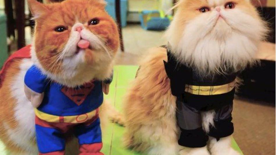 Adorable-superhero-kitties-it-s-a-bird-it-s-a-plane-it-s-a-hairball-video--b3a17bea37